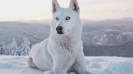 foto hond bij artikel over aansprakelijkheid voor dieren 6:179 BW