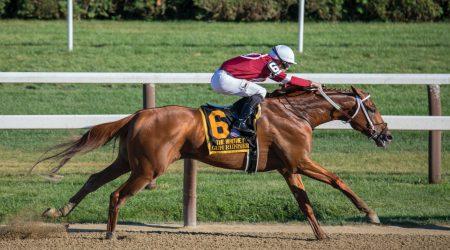 foto paard met jockey bij artikel over aansprakelijkheid bedrijfsmatige gebruiker
