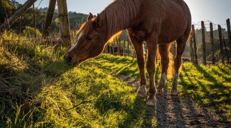 foto van paard in weiland bij uitspraak rechtbank over aansprakelijkheid voor letselschade door paard
